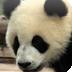放置动物园中文无敌版(动物园挂机中文无敌版)