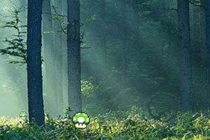 勇士采蘑菇