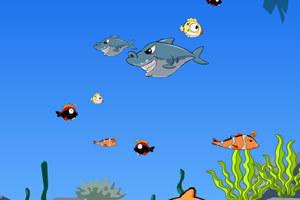 大鱼吃小鱼美丽版
