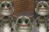 会说话的汤姆猫新版2014版