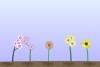 鲜花进化中文版