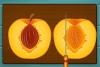 制作黄桃蛋糕