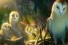猫头鹰守护神找字母