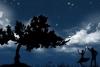 梦幻情人节找星星