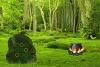 怪物魔法森林逃脱