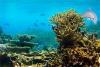 救援深海动物